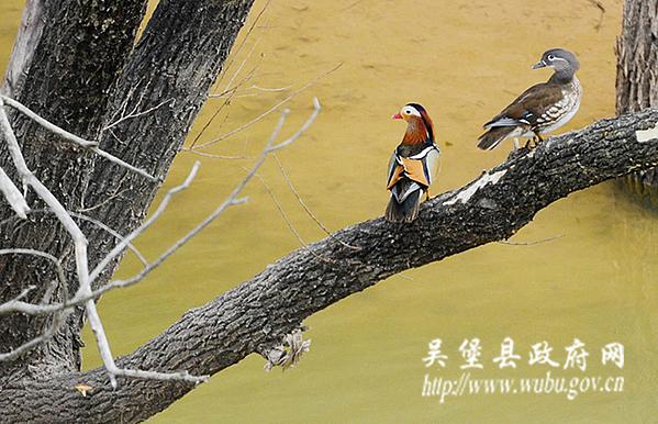 吴堡旅游-湿地美景